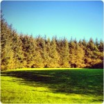 Derry Bed & Breakfast Ballyarnett Natural Park 2