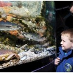 Derry Bed & Breakfast Riverwatch Aquarium 1