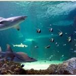 Derry Bed & Breakfast Riverwatch Aquarium 5