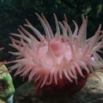 Derry Bed & Breakfast Riverwatch Aquarium 6