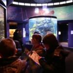 Derry Bed & Breakfast Riverwatch Aquarium 7